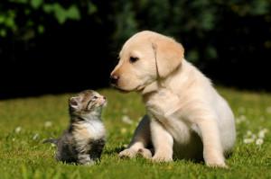 cat_dog_119617003